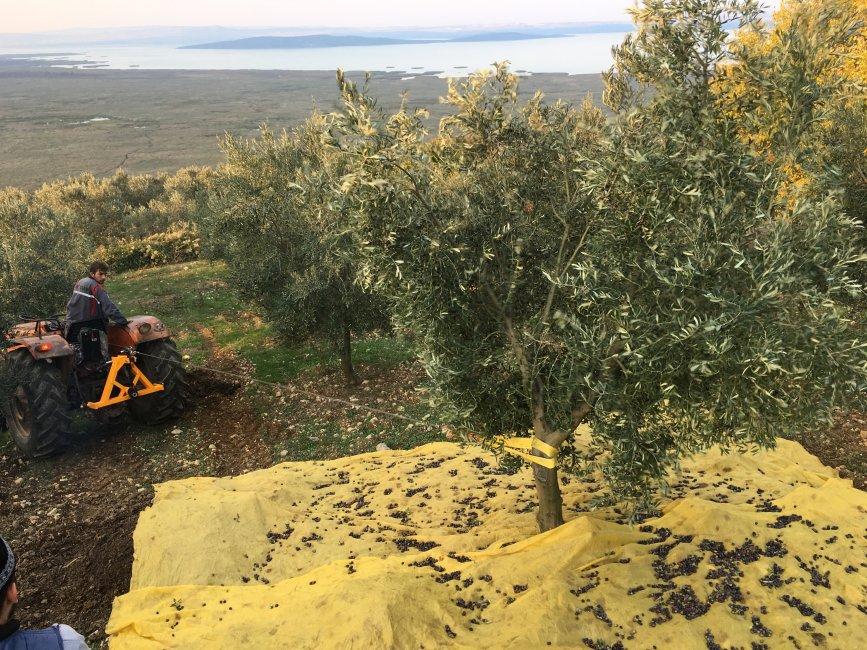 Встряхиватели деревьев - принцип работы